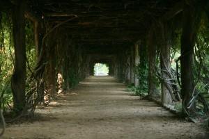 A trail in Coker Arboretum